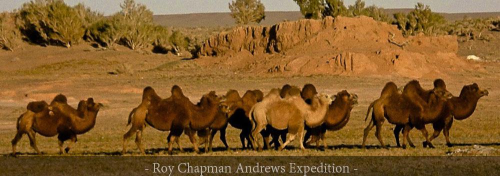 GER to GER Mongolia Gobi Desert Trips - Travel and Explore