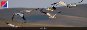 GERtoGER-Mongolia-Headers-Wildlife