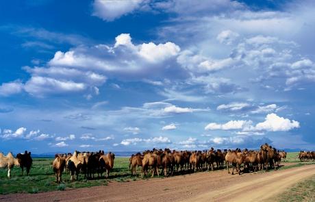 GER to GER GEOtourism Mongolia - Gobi Desert and Camels