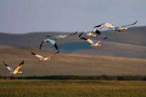 GER to GER GEOtourism Mongolia - Bird Watching and Wildlife