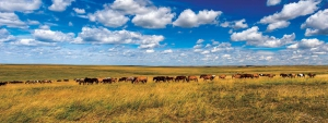 GER to GER GEOtourism Mongolia - Mongolian Horses