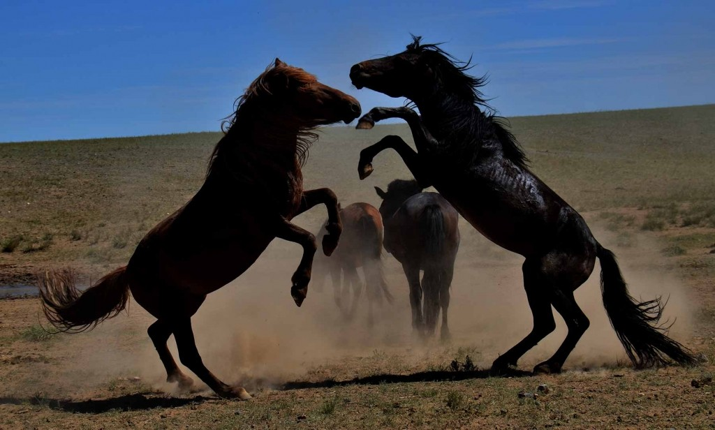 GER to GER GEOtourism Mongolia - Horse Culture Hair and Hide Usages