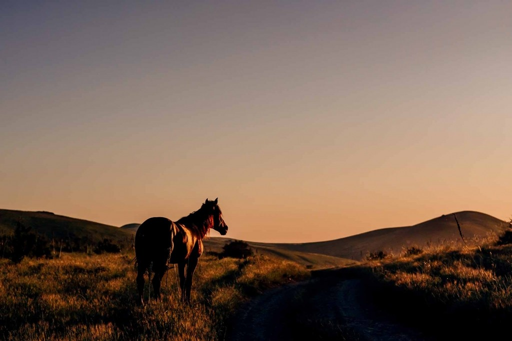GER to GER GEOtourism Mongolia - Mongolian Horse Culture Riding Horses