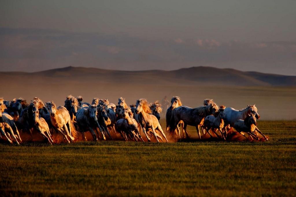MONGOLIA HORSEBACK RIDING TOURS - Mongolia Horses